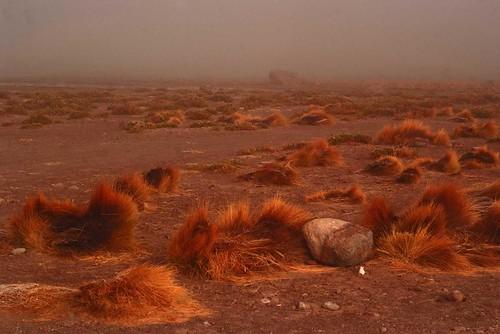 La Puna andina, altopiano. Foto di Massimo Di Terlizzi