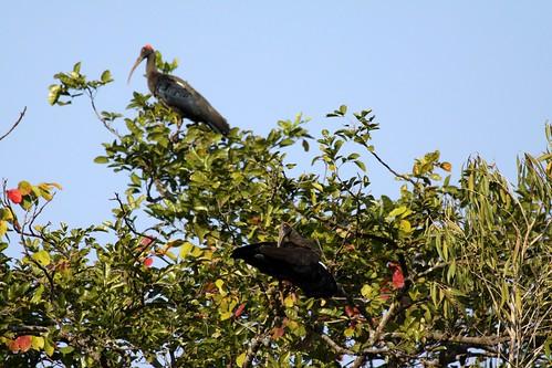 Low 2009-11-29 Sasan Gir - 01 Safari 09
