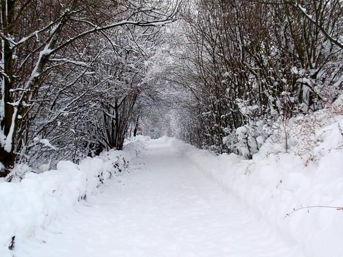 Winter Januar 2010