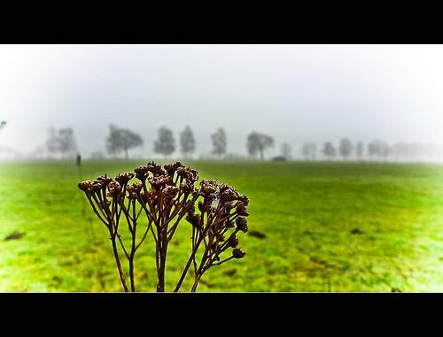 _on_a_misty_day