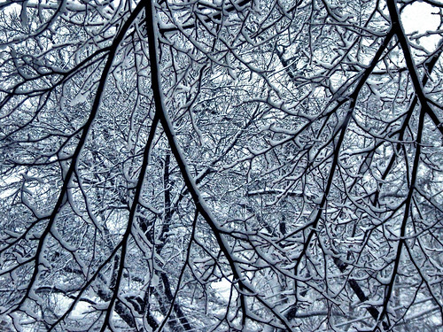 Snow Day - close branches