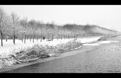 Winter Trees in line..... (Alex Verweij) Tags: trees winter bw snow ice water bicycle canon line explore fiets almere fietser bomenrij 40d dedoka alexverweij