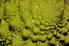 Romanesco broccoli (-- Green Light Images --) Tags: fractal brassicaceae selfsimilarity dsc5911 config17 diymacro17 selfaffine