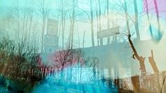 the only alternative (JKnig) Tags: leica trees winter driving doubleexposure roadsigns hudsonvalley butilikeem leicadlux4 notsurewhythecolorsgotfunkyhere chriswantedmoremultipleexposures sohereyougobubbe
