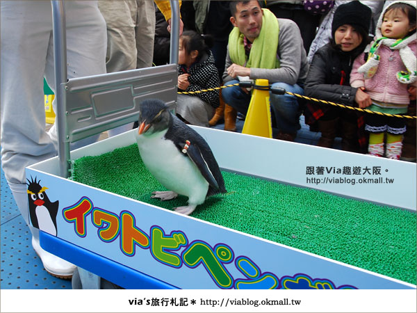 【via關西冬遊記】大阪海遊館~冬季限定!無敵可愛企鵝遊行來囉!15