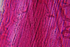DSC_0533 (John Aho) Tags: microscopy hiddenworld nikond90 lietzmicroscope