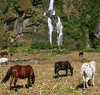 IMG_1807 (Cyberian8) Tags: nepal animal trek asia himalaya animaux diere senderismo senderisme 動物 tier 동물 himalaia treking annapurnas djur 动物 hayvan desanimaux животных hewan haiwan الحيوان životinja สัตว์ vueltaalosannapurnas पशु
