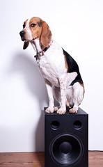 286/363 Know your audio equipment (Paguma / Darren) Tags: dog hound stereo sound speaker floyd audio subwoofer tamronspaf1750mmf28xrdiiildasphericalif