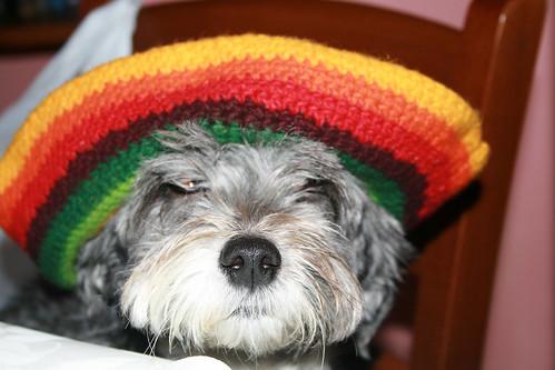 Foto Cane divertente con cappello giamaicano