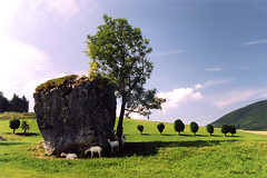 Le rocher aux moutons (didier95) Tags: montagne arbres paysage arbre moutons mouton pelouse isere rhonealpes mfcc