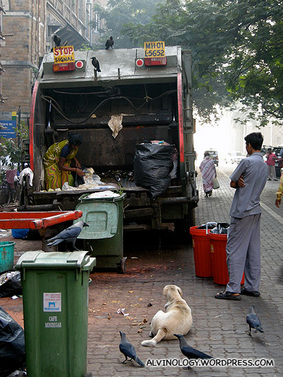 In India, the rubbish truck is followed by crows, dogs and cows