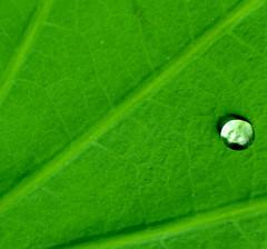 Life Begins here  ... ( Frog) Tags: nikon malaysia pj petalingjaya 2010 d90 anawesomeshot theunforgettablepictures  flickrunitedaward