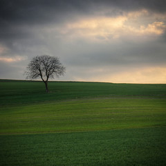 The Only One (Philippe Saire || Photography) Tags: tree nature field canon square landscape eos switzerland suisse champs meadow 1855mm prairie paysage campagne arbre hdr gettyimages carr 500x500 photomatix 450d philippesaire