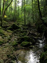 Chaltenbrunnental / Kaltenbrunnental (chrchr_75) Tags: green nature landscape schweiz switzerland suisse swiss natur bach caves valley grn christoph svizzera landschaft wandern solothurn soleure tal wanderung geschichte suissa 0909 bchlein kanton hhlen chrigu wanderwege chrchr hurni chrchr75 kaltbrunnental chriguhurni chaltbrunnental chaltbrunnetal kaltbrunnetal kaltbrunnentau kaltbrunnetau chaltbrunnentau chaltbrunnetau