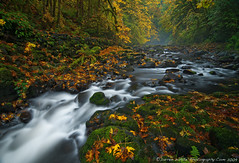 Fall Fantasy (Darren White Photography) Tags: autumn west fall nature misty fog landscape waterfall nikon october fallcolor northwest north scenic cascades pacificnorthwest washingtonstate 2009 fallenleaves natual d300 experiencewa tokina116 vosplusbellesphotos colorfulcreek wwwdarrenwhitephotographywordpresscom wwwdarrenwihtephotographycom