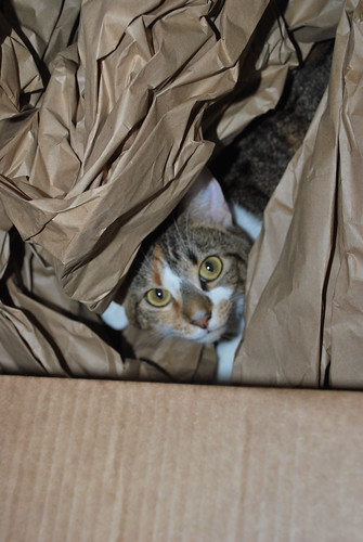 callie in box 2