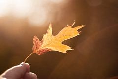 """""""Life is like a boomerang; what you give, you get back."""" Acad (Simplymichelle) Tags: california autumn mountains green fall beautiful yellow forest golden leaf hand sunny georgetown woords"""