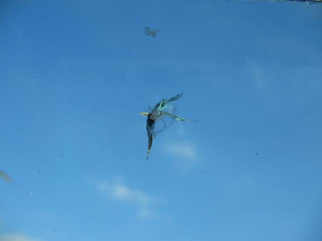 Chipped window by saveon