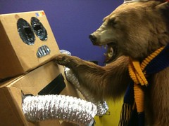 Bear vs Robot