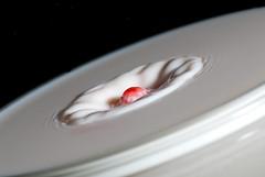 red vs. white III (-nichtsdestotrotz-) Tags: red white color rot milk nikon blitz farbe milch weis beben d80 nichtsdestotrotz studiowasserexperimente