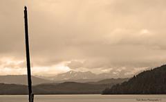 My Little Alaska Friend (Nick Boren Photography) Tags: love alaska sepia nikon friend d70 little bald used just series tones eagles cordova the continuing my i thelastfrontier