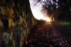 Alnwick a Leafy Lane
