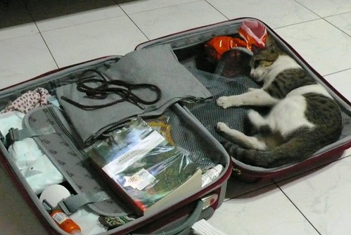 How to pack a cat into a suitcase