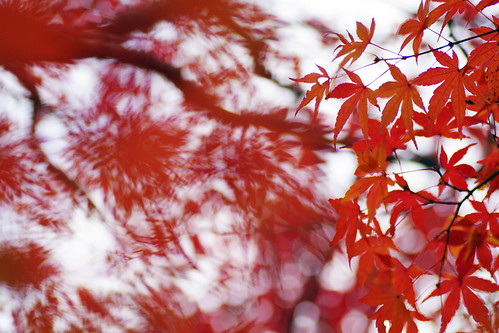 Gyosen Park Autumn Leaves 04
