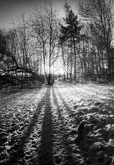 Shadows of Winter (Grant_R) Tags: trees winter blackandwhite bw sun snow ice monochrome scotland edinburgh december shadows lowsun grantr
