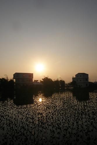 37.水田上的夕陽