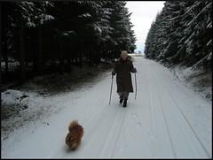 dana hilliot - dans la grande forêt