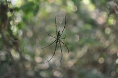 20091213-第二發現蜘蛛 (2)