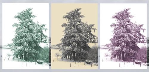 2010 janvier 13 - neige 011 - composition autour du cèdre de Lully