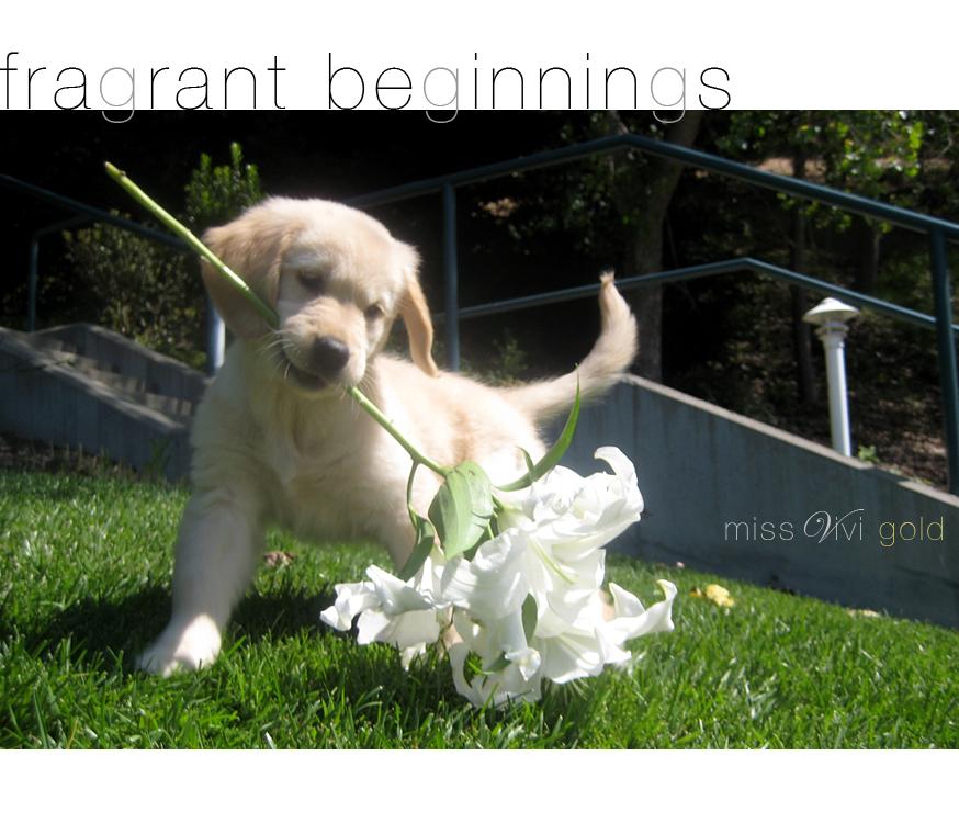 missvivigold-2009-08-28-IMG_2636-playful-flirtatious