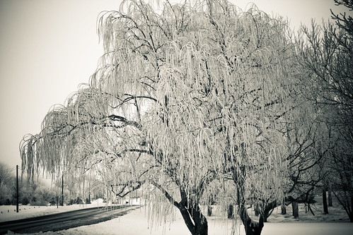 Wintry Weeping Willow