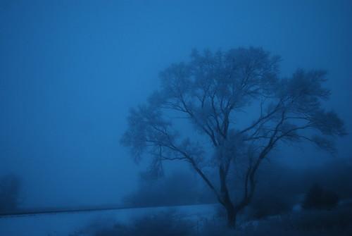 Snowy blue....
