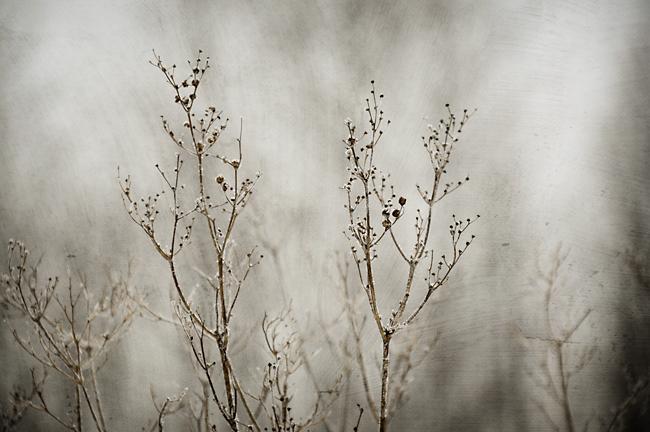 rimfrost 2