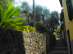strada italiana 2 (caruga2005) Tags: sea italy italia mare liguria laspezia tellaro goldstaraward