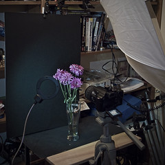 lighting setup_7546 (mondays child) Tags: camera light flower up set umbrella lumix photography photo shoot shot flash violet ring cranberry shooting brolly ringlight fz50 plumb lightingsetup