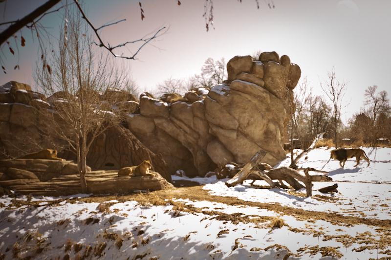 Zoo (1 of 15)