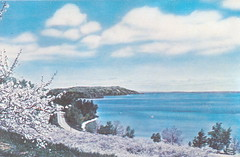 Traverse MI 1950s East Grand Travese Bay Cherry Blossoms Photo by Phil Balyeat Avery Card 58253 S1155661 National Cherry Festival Postmark 1961