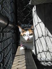 ASAP cat