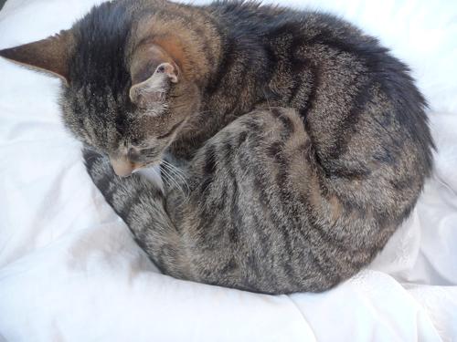 schnurrli sleeping