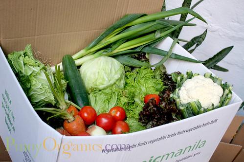 OrganicManila-large box