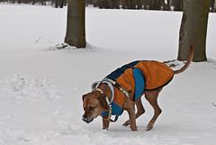 Schneespaziergang Feb. 2010 (CaneAmi) Tags: schnee fine akin zarah mppchen feb2010
