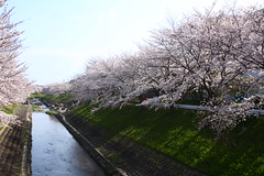 IMG_7017 (Ryohei_M) Tags: canon canoneoskissx2