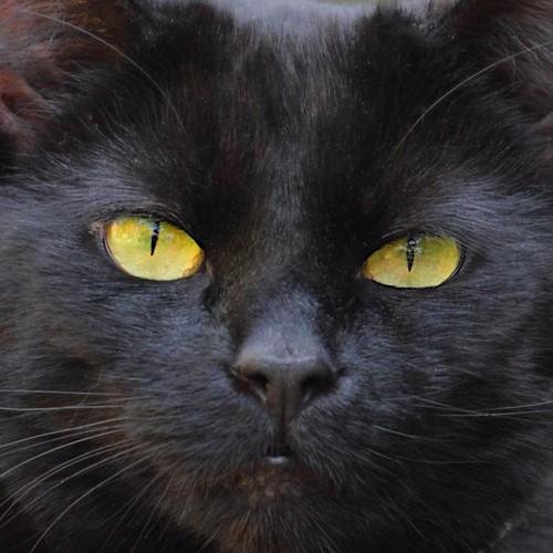 T2i - The Black Cat