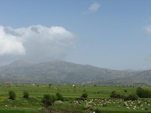 Plateau de Lasithi