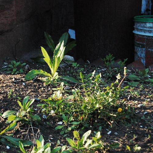 nikon - front garden-0121