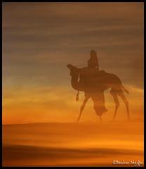 It Must be a Camel ! (Bashar Shglila) Tags: world sea sky sun mountains sahara clouds frank photography sand gallery view desert photos top best most camel worlds be must popular libya camels lybia touareg zappa fata libyan ghadames libia morgana libyen صحراء ليبيا líbia libië libiya liviya ghadamis libija غدامس либия توارق ливия լիբիա ลิเบีย lībija либија lìbǐyà libja líbya liibüa livýi λιβύη mygearandmepremium mygearandmebronze mygearandmesilver mygearandmegold mygearandmeplatinum mygearandmediamond ايموهاغ هقار